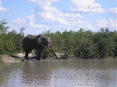 From_elephants_in_the_bush_to_gen_2